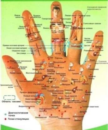 рука-органы