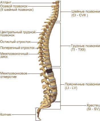 2_spine